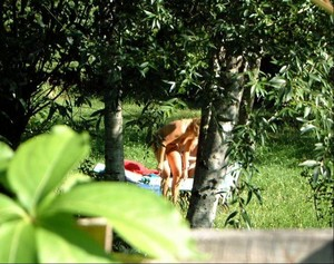 Neighbours-wife-tanning-in-the-garden-with-a-friend-naked-17agxj2qau.jpg