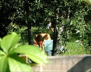 Neighbours-wife-tanning-in-the-garden-with-a-friend-naked-27agxjeuqf.jpg